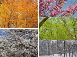 Foto gallery about the beauty and colors of the trees.