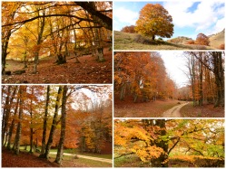 Beautiful pictures of the Autumn's colors