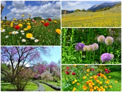 Foto gallery about the wonderful spring season